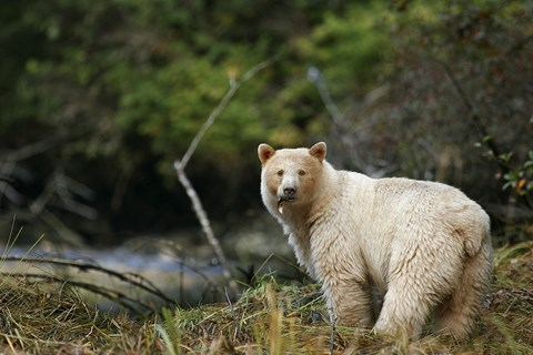 Great Bear Rainforest Adventure Cruise