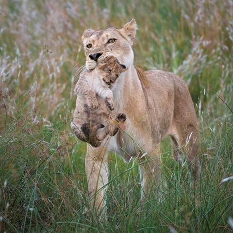 Serengeti Ngorongoro Crater Fly In Tanzania Adventure World Au