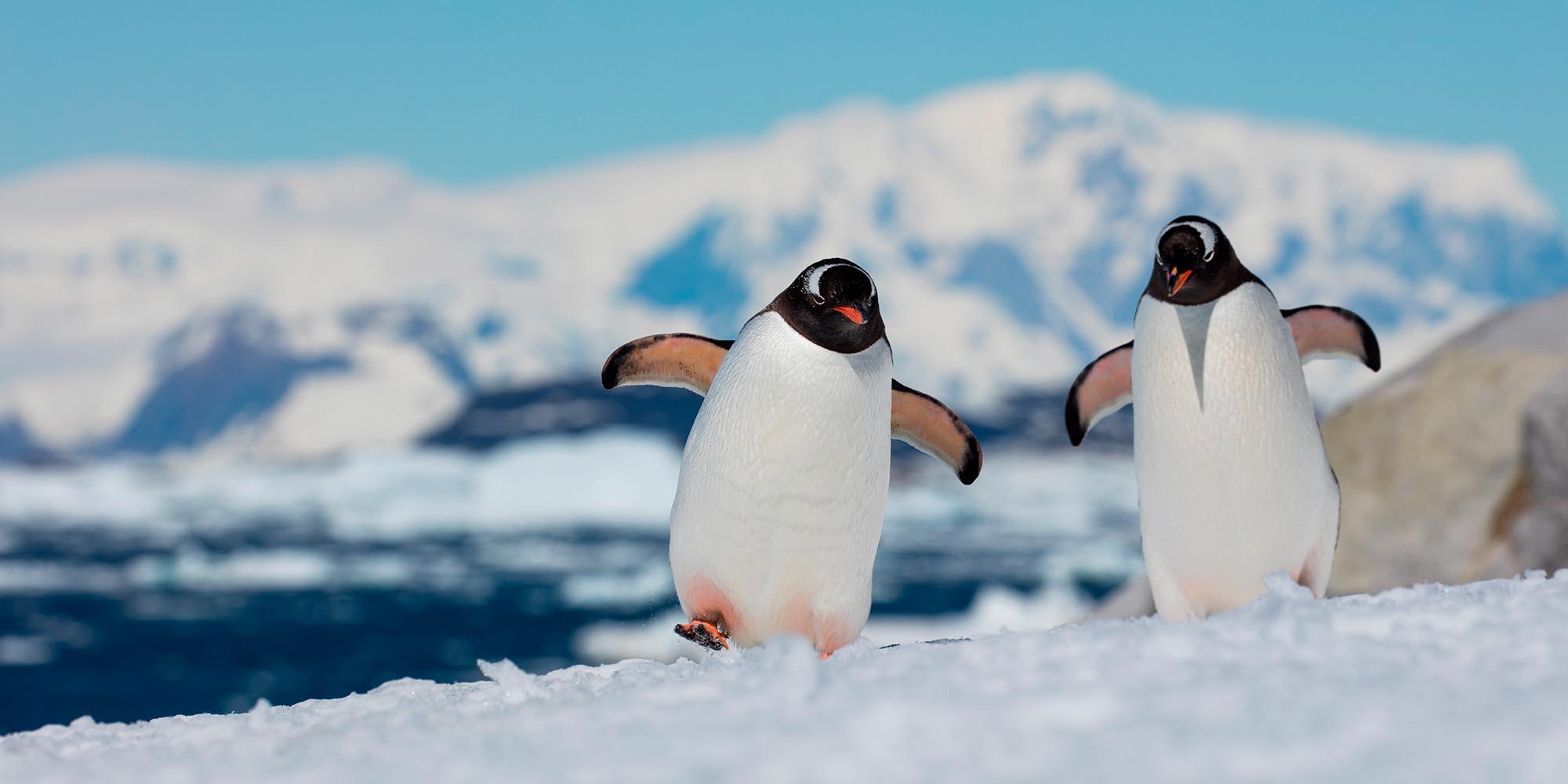 Картинка пингвин в арктике