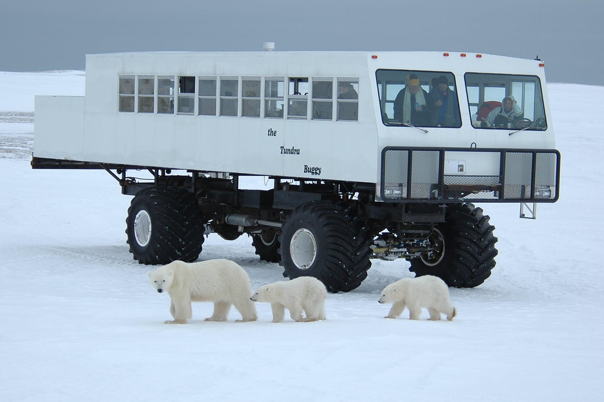 Tundra Buggy Lodge Canada Adventure World Au