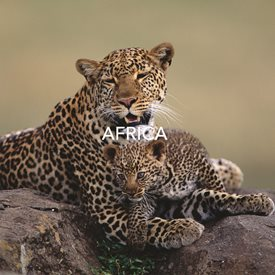 AW_AFRICA_1617_Cover.jpg